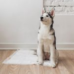 are baby diapers dangerous to dogs